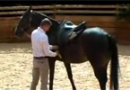 Saddling and Long-reining video