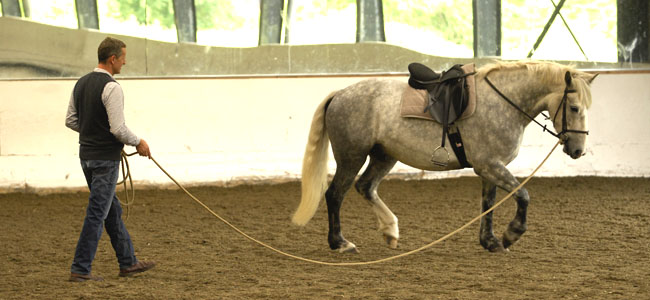Michael Peace - Long Reining and Lunging